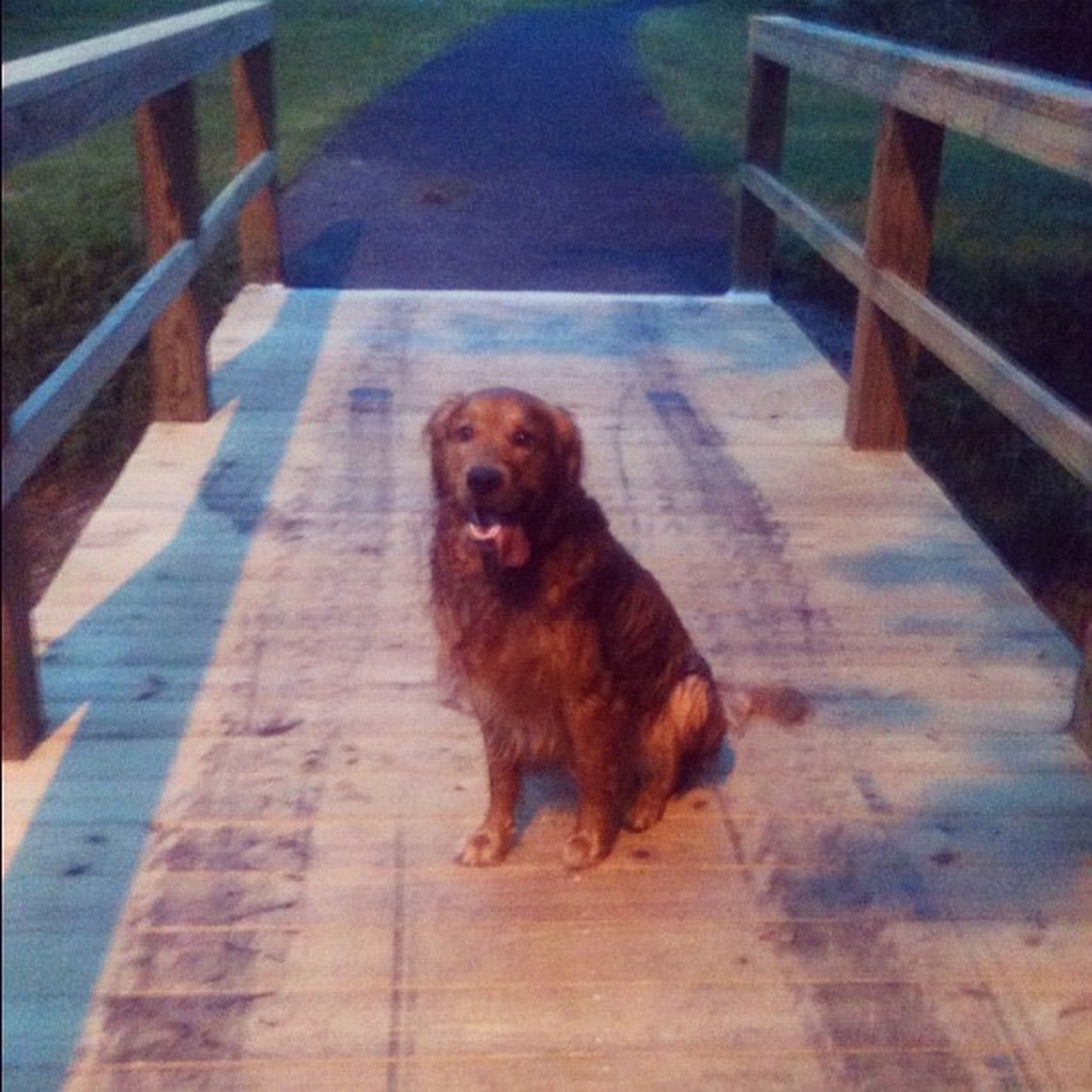 dog, pets, domestic animals, animal themes, mammal, one animal, high angle view, wood - material, full length, railing, steps, sitting, boardwalk, looking at camera, sunlight, wooden, portrait, no people, relaxation, day