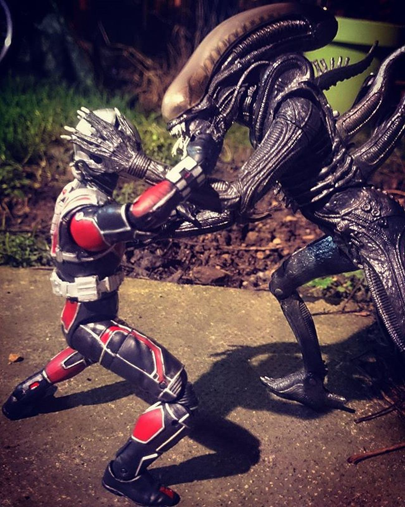 I asked antman for a JANTMANuary day 10 pose but he said he had a prior engagement..... Xenomorphs don't punch themselves you know! JANTMANuary Antman Marvel Toyptoyphotography Toyoutsiders Toypops Toycrewbuddies Toygroup_alliance Toydiscovery Toy_syn Wheretoysdwell_photofeatures Wheretoysdwell Alien Xenomorph Geoffthexenomorph Toyark Toyartistry Epictoyart