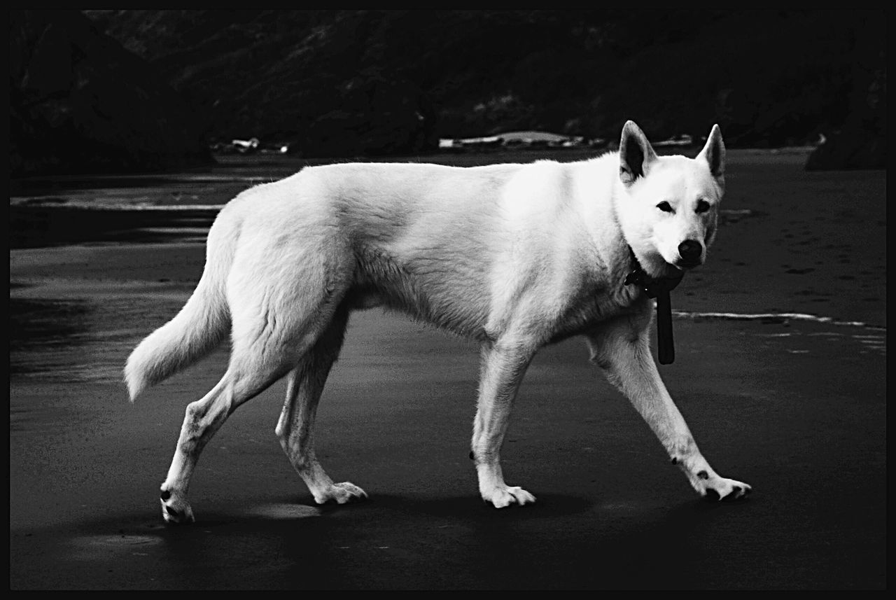 Check This Out EyeEm Masterclass From My Point Of View EyeEm Best Shots Beautiful Wolf Bestfriend Bestoftheday EyeEm Best Shots - Black + White Pets