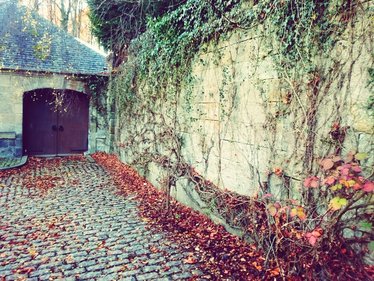 No People Outdoors Built Structure Beauty In Nature Nature Autumn Leaves Fallenleaves Fallenleave Barn