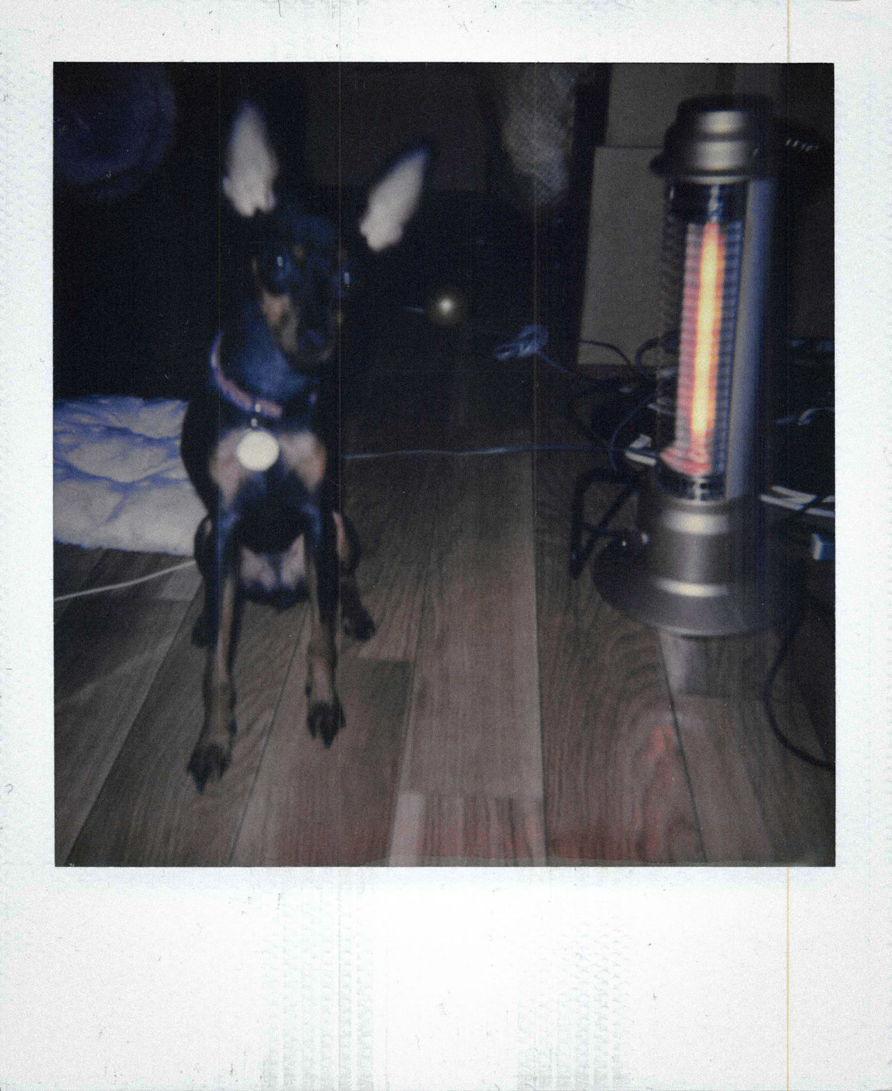 Digital Vs Analog Film Impossible Project Polaroid Polaroid 600 Looking At Camera Photographic Memory Animal Animal Themes Classic Day Dog Domestic Animals Indoors  Low Section No People One Animal Pets Simple Moment Relaxing Indoors  Scan