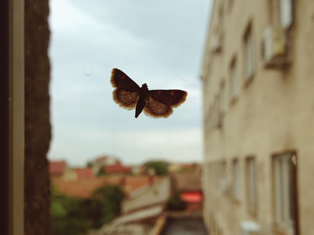 Translucid... Flying Moth IPhone Built Structure Building Exterior Focus On Foreground Sky Insect Animal Themes Spread Wings City Adapted To The City Details Found On The Roll Fresh On Eyeem  Details Of My Life Window My Favorite Photo VSCO City Close-up Nature One Animal Made In Romania Nature On Your Doorstep