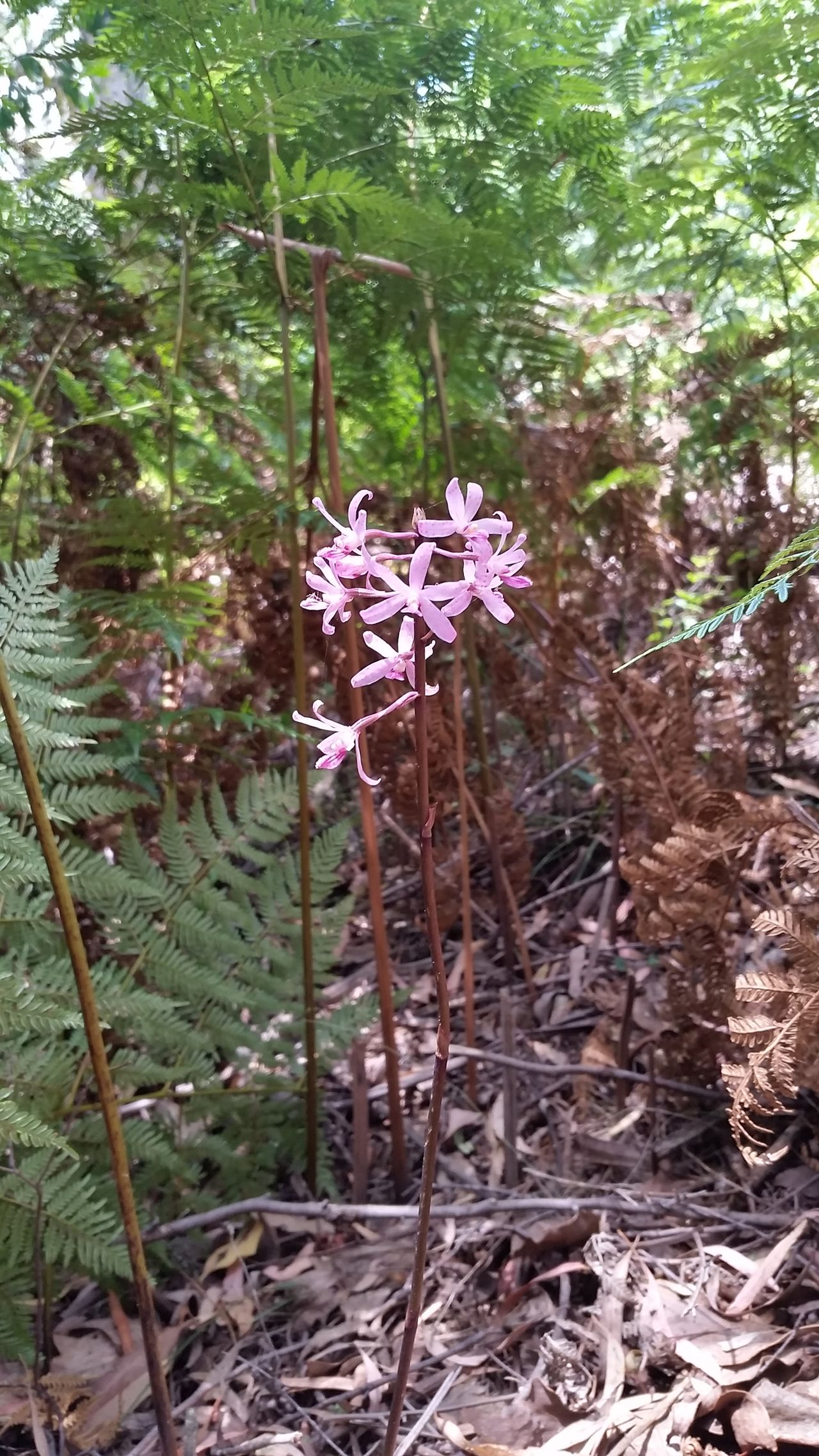 Nature Forest Tree No People Growth Outdoors Beauty In Nature Plant Day Australian Landscape Mountain Nature Hiking Australian Bush Hikingadventures Fern Pinkflowers