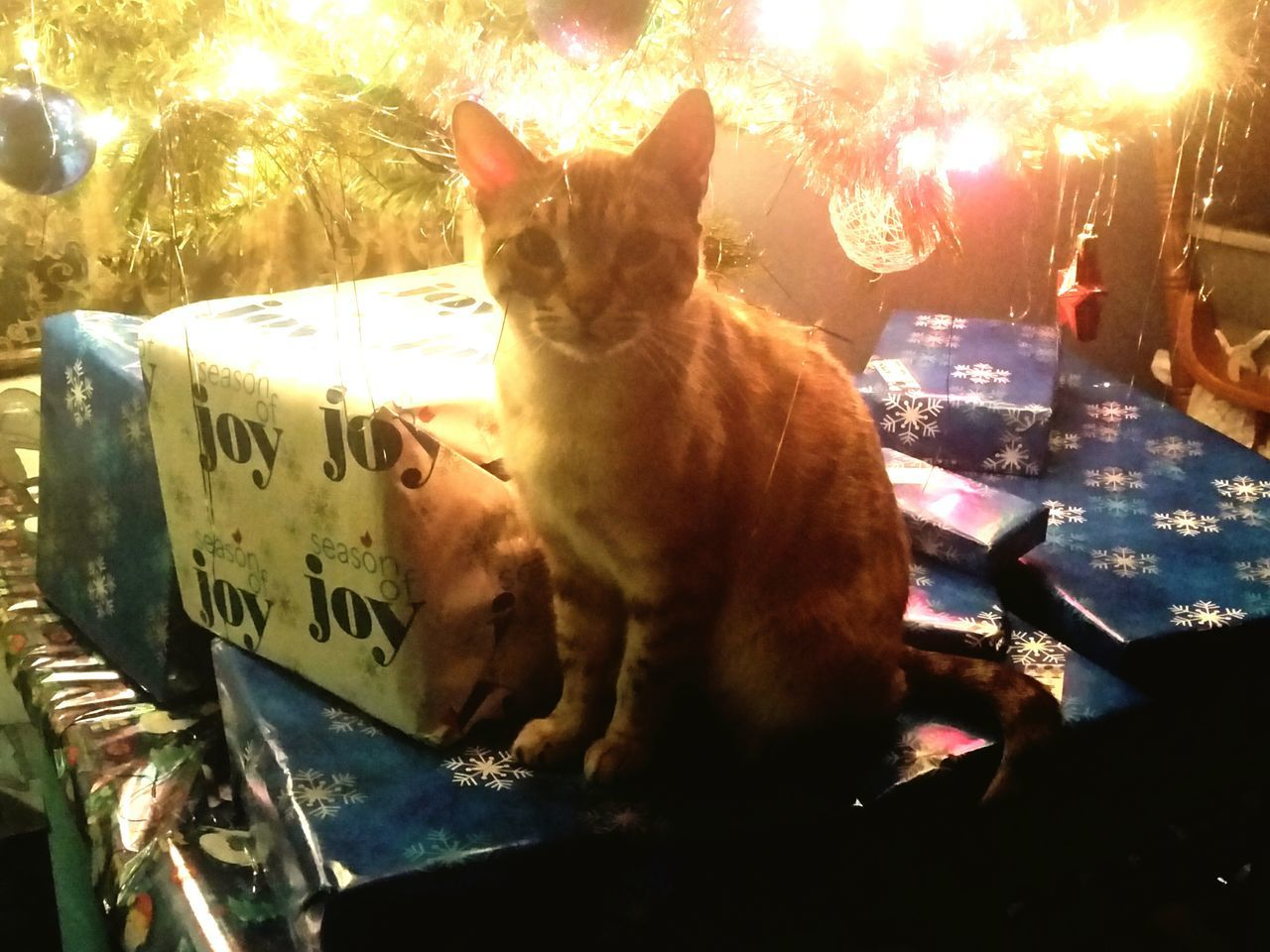 Mosa got caught Taking Photos Christmastime Christmas Fun Furbaby Love Furbaby From My Point Of View