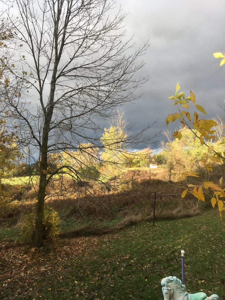 tree, nature, autumn, beauty in nature, tranquility, tranquil scene, scenics, change, outdoors, day, branch, leaf, growth, no people, landscape, field, bare tree, grass, sky