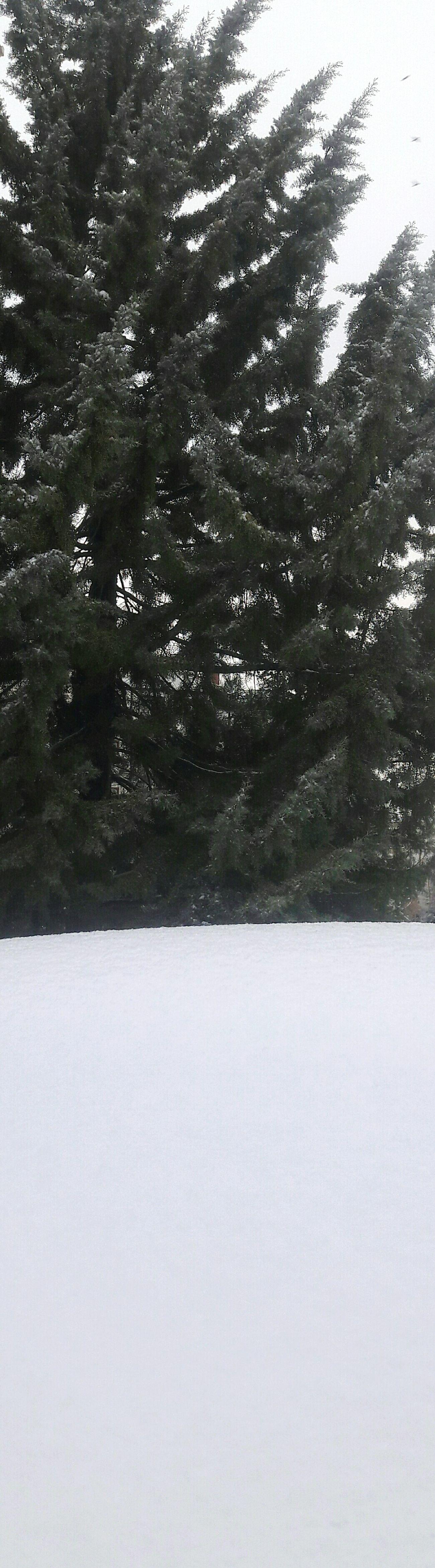 Snow Tree Winter Nature No People Cold Temperature Outdoors Beauty In Nature Day Sokaklar Kar Kum Gibi Siyahbeyaz Gibi Yılın_ilk_karı Wintertime Sokak White Color Karlı Güne Merhaba :)) Kara Basma Iz Olur
