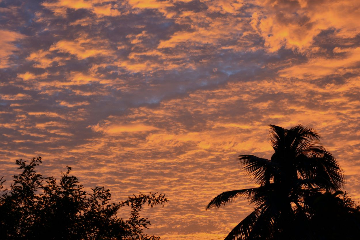 Tree Sunset Silhouette Palm Tree Nature Sky Scenics Cloud - Sky EyeEmBestPics Abstract Colors Silhouettes Beauty In Nature EyeEm Best Shots Evening Sky Twilight Redsunset RedSky Awesome Clouds Dramatic Sky Awesome Cloud Formation And Colours