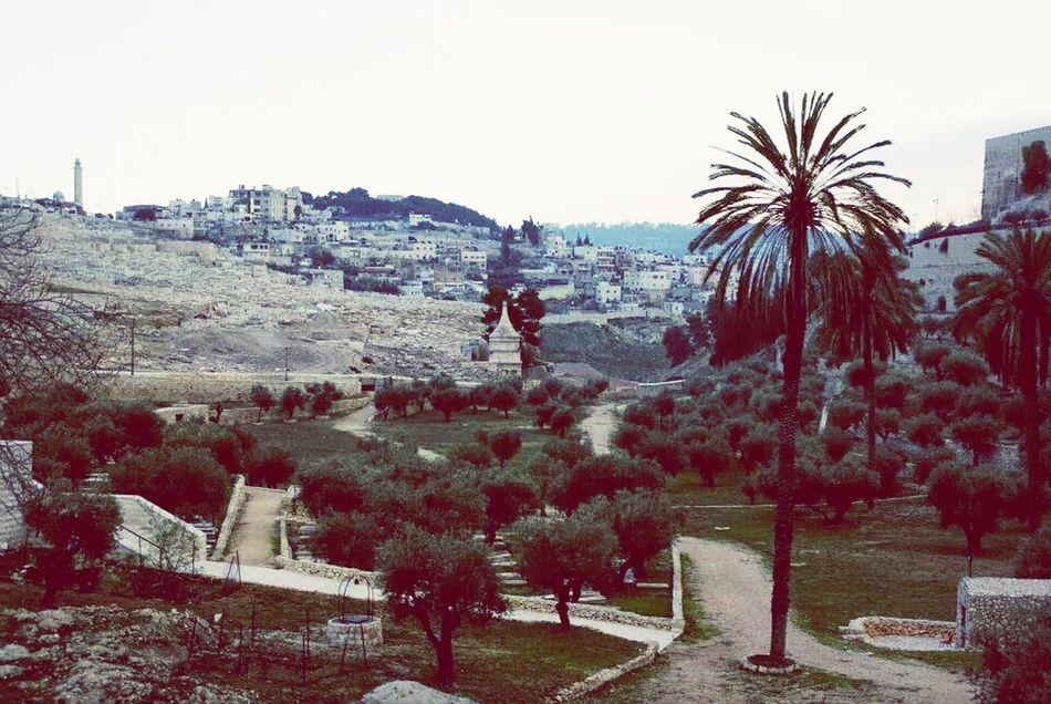 Jerusalem Landscape Cityview At Mount Of Olives