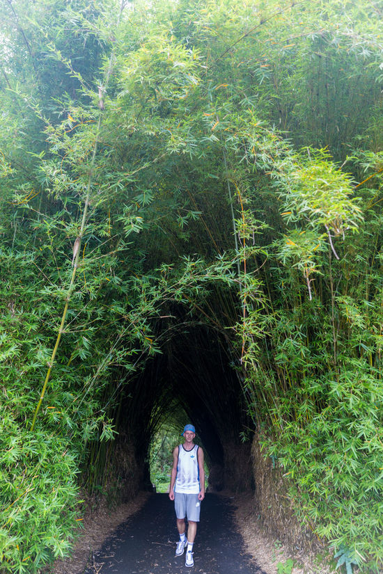 Reunion island at Salazie Bamboo Forest Bamboo Tunnel Day Showcase March Exploring EyeEm RéunionIsland Farm Field Grass Green Green Color Growing Growth Leading Leaf Narrow Nature Plant Reunion Island Rural Scene Salazie Stem The Way Forward Vacation