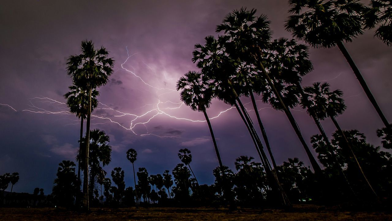 lightning, tree, power in nature, nature, sky, forked lightning, beauty in nature, thunderstorm, storm, silhouette, no people, electricity, weather, scenics, low angle view, cloud - sky, outdoors, storm cloud, growth, landscape, night