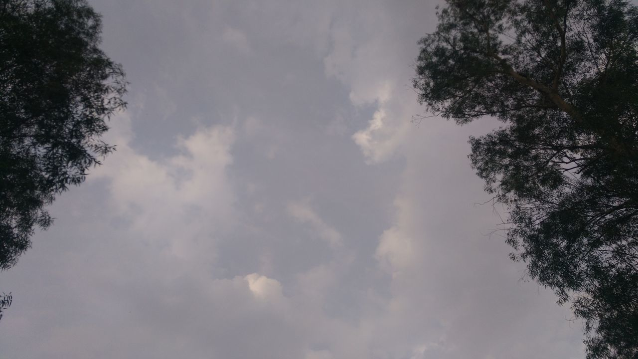 tree, low angle view, sky, nature, cloud - sky, no people, beauty in nature, outdoors, day, tranquility, scenics
