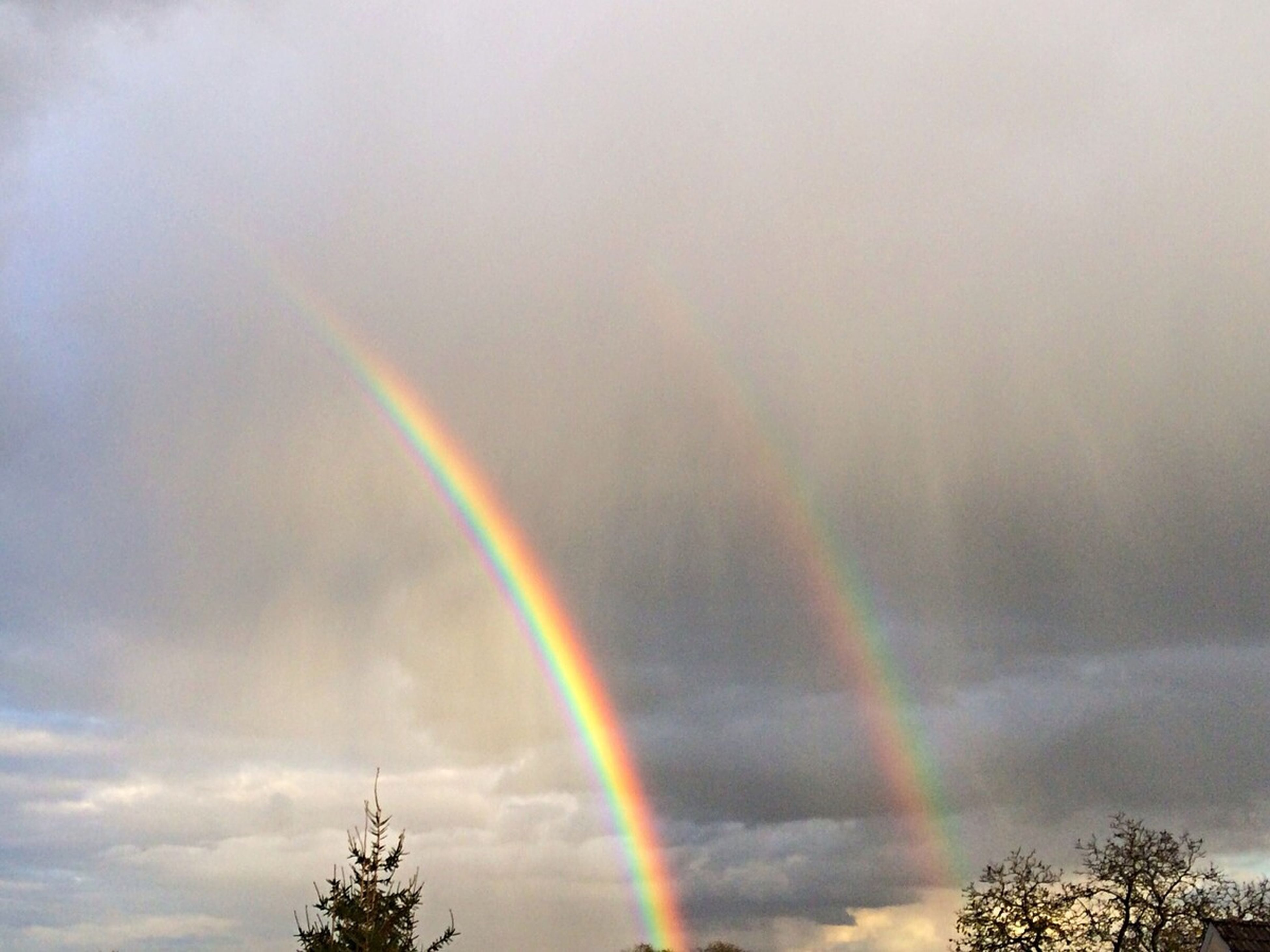 rainbow, low angle view, sky, tree, multi colored, cloud - sky, beauty in nature, scenics, weather, cloudy, tranquility, nature, overcast, tranquil scene, idyllic, treetop, atmospheric mood, dramatic sky, outdoors, no people