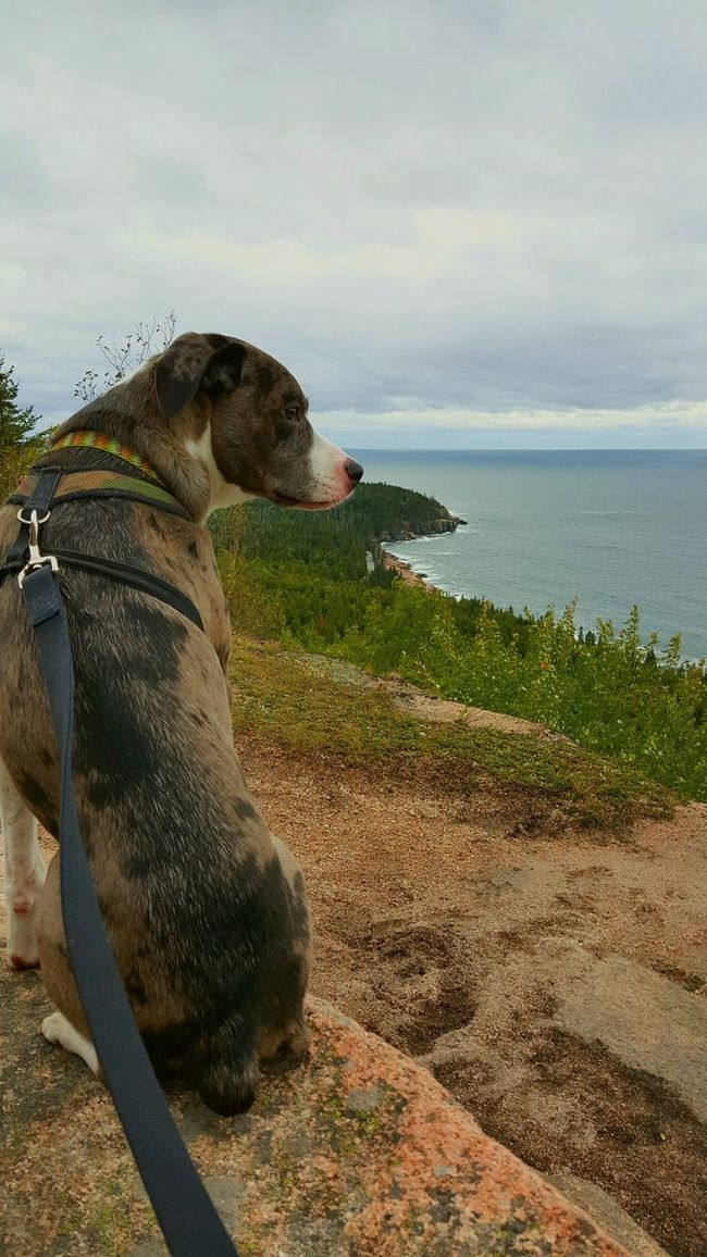 Enjoying Life Campingwithdogs Adventuresofsparrow Hike Acadianationalpark Maine 207forlife Nature Boothbay Relaxing