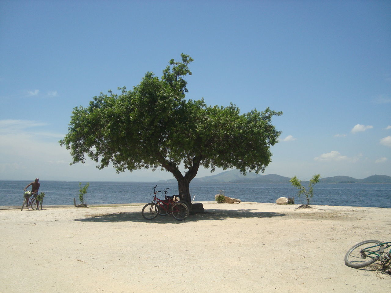 tree, beach, sky, sea, sand, bicycle, day, transportation, nature, beauty in nature, scenics, outdoors, water, real people, men, horizon over water, one person, people