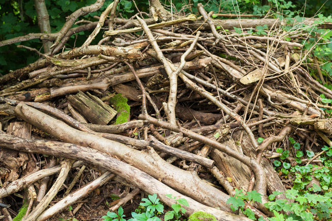 Pile of deadwood in forest Brushwood Deadwood  Forest Growth Material Nature Tree Trunk Twigs Wood Wood - Material