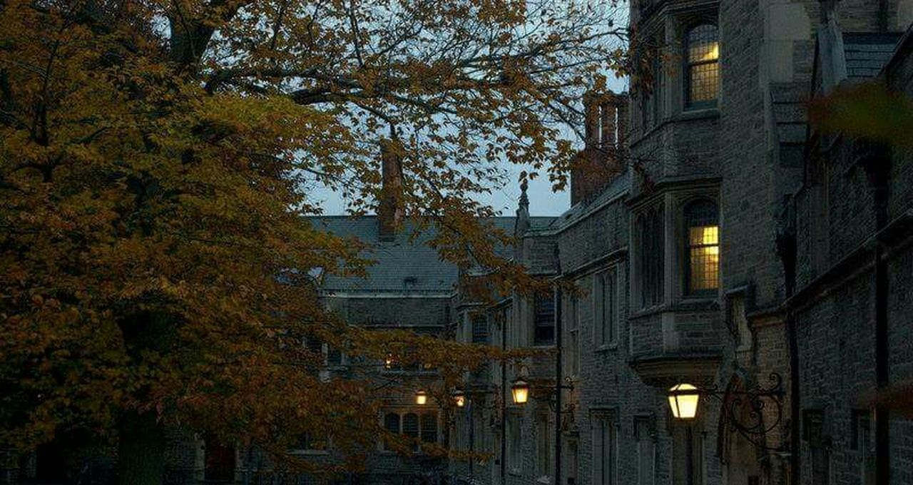 tree, autumn, building exterior, architecture, built structure, no people, change, illuminated, outdoors, leaf, branch, nature, day, city