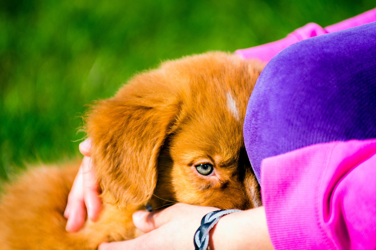 Animal Themes Brown Close-up Day Duck Toller Grass Human Body Part Looking At Camera Mammal One Animal Orange Color Outdoors People Pets Portrait Puppy Love Relaxation Young Adult