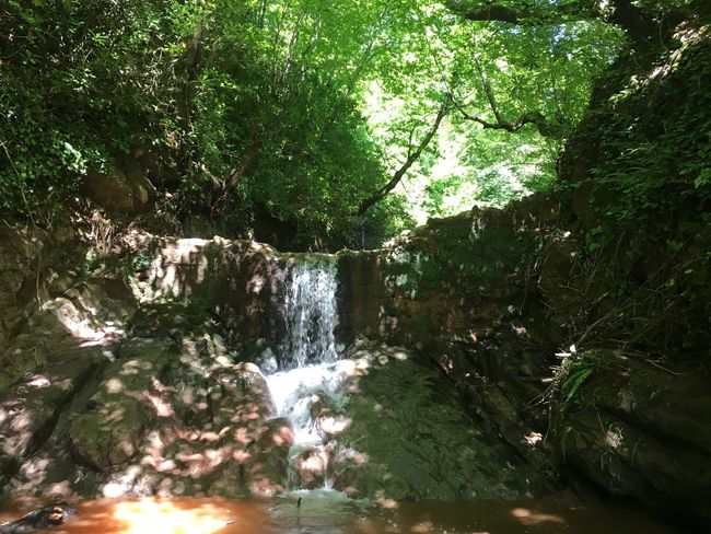 Green Green Color Green Green Green!  Selale Arıt Bartın Turkey Jungle June 2016 Jungle Trekking