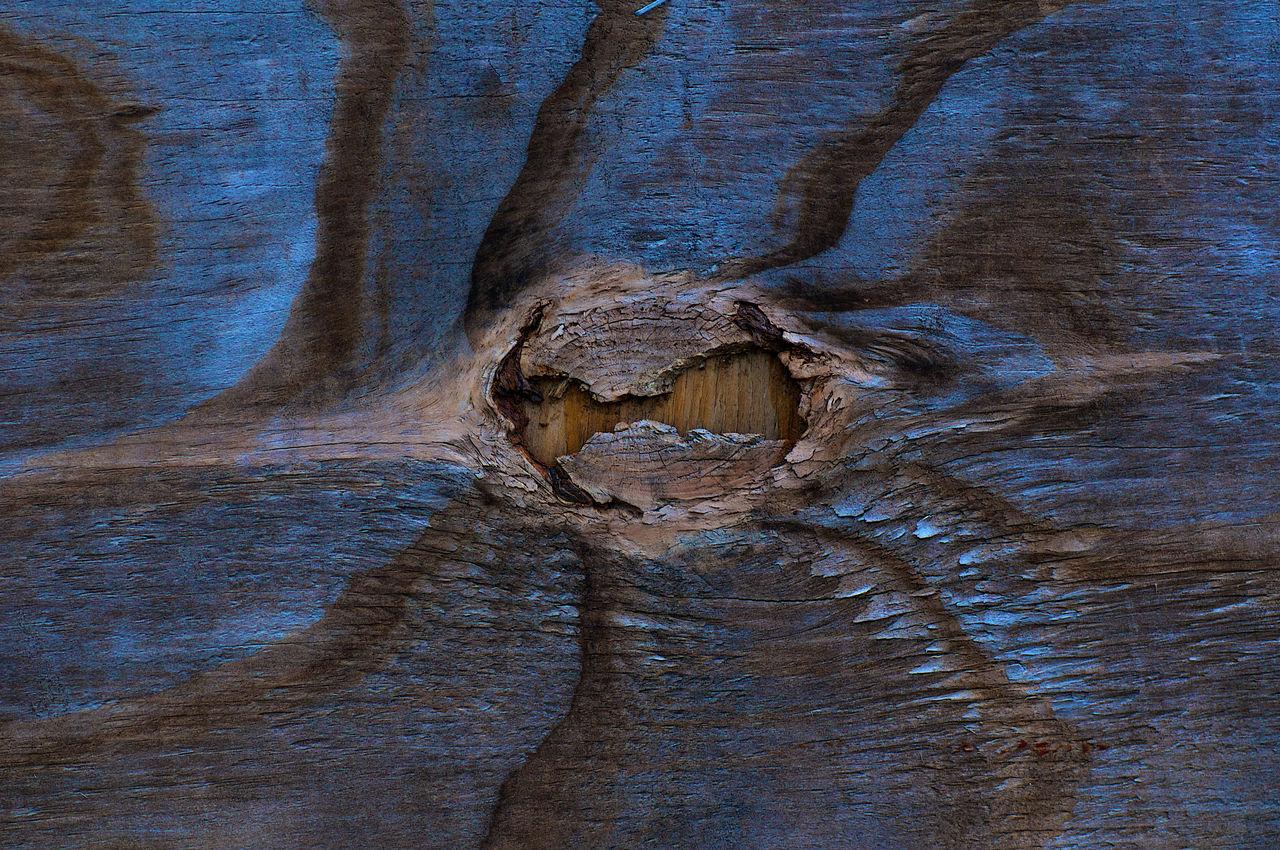 Age Rings Aged Wook B Blackandwhite Blue And Brown Cedar Cut Wood Pine Tree Rings Rippled Waves Wood