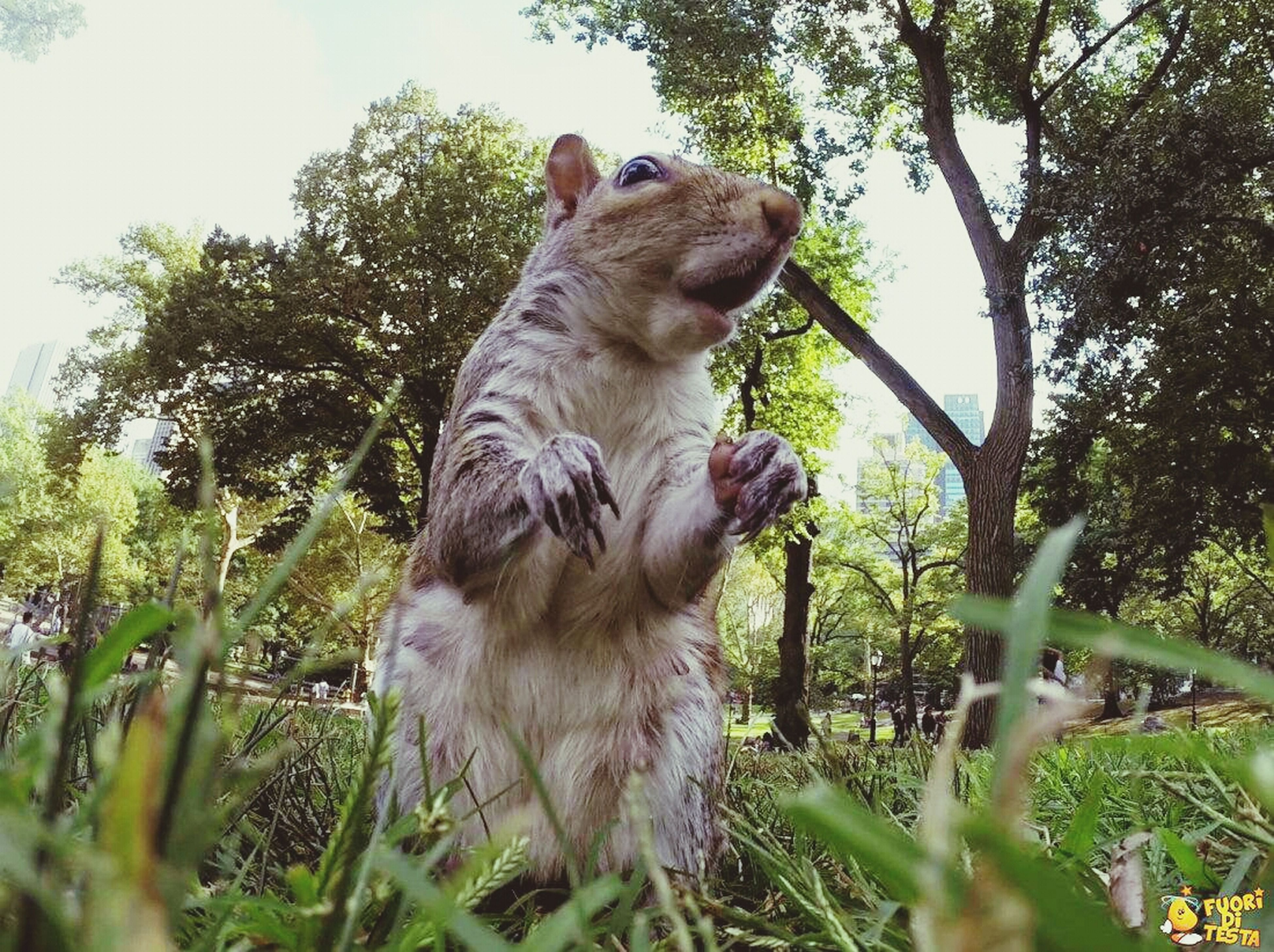 animal themes, mammal, one animal, tree, sitting, monkey, low angle view, dog, pets, domestic animals, wildlife, branch, animals in the wild, sky, looking away, outdoors, nature, no people, day, growth