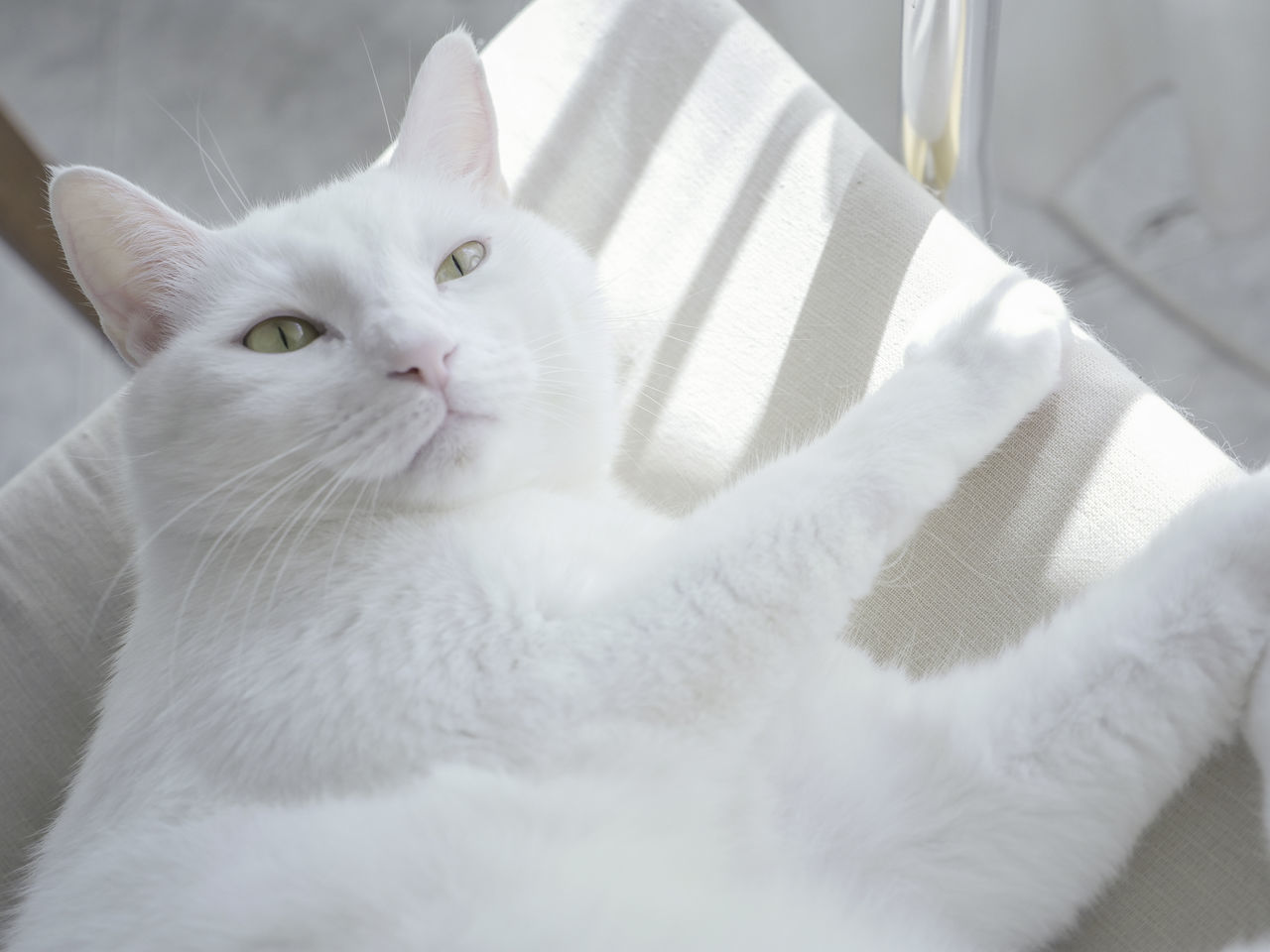Cat Comfortable Comfy  Cute Cat Domestic Animal Domestic Cat Feline Feline Portraits Indoor Lovely Cat Paws Paws And Purrs Pet Relax Relaxing Relaxing Time Sunny Whiskers White Cat White Color