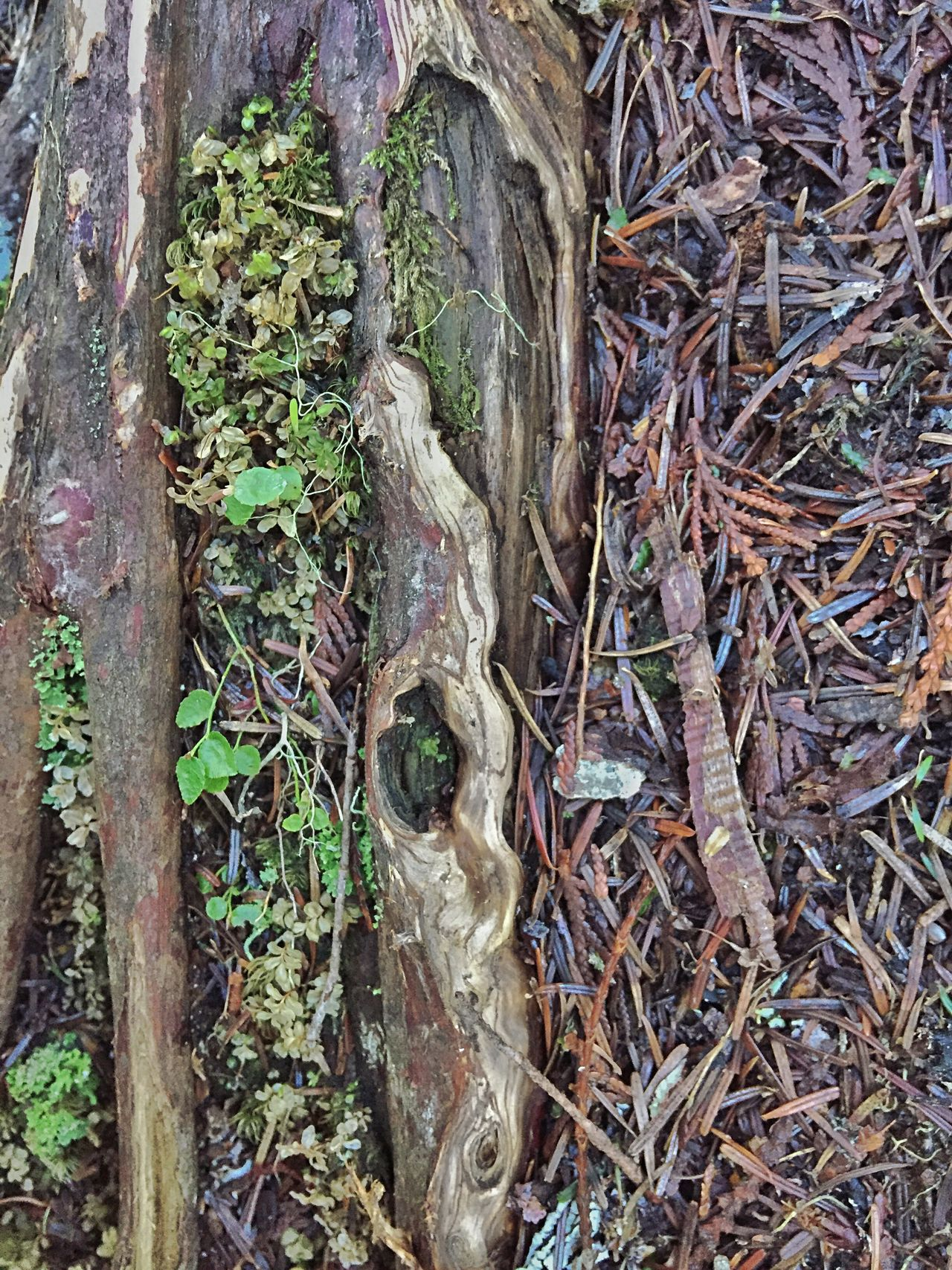Nature Outdoors Growth Tree Trunk Close-up Tree Wood Textured  Shapes In Nature  Beauty In Nature Scenery Abstractions In Nature Layers And Textures