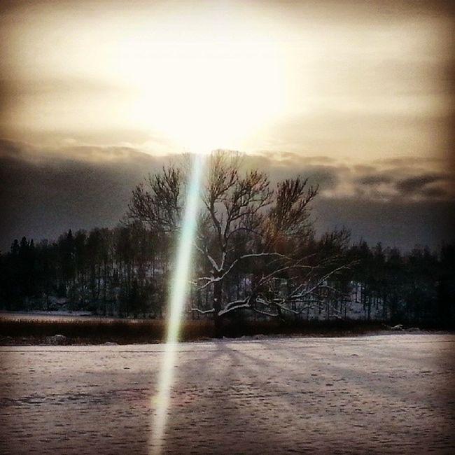 Beam me up Scotty! Sunbeam Beam Yxnerum Yxningen tree sunshine winter winter_sun january sweden östergötland ninacombat
