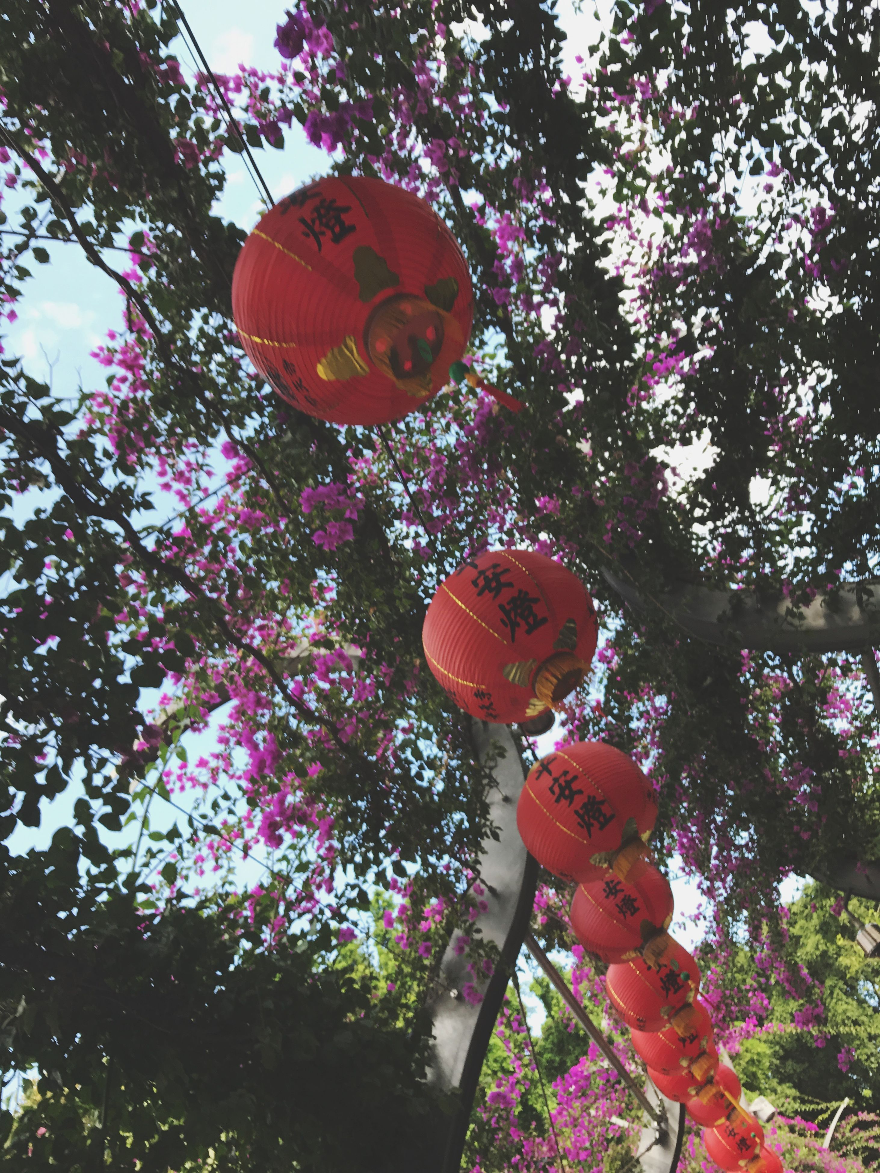 low angle view, tree, no people, hanging, outdoors, sky, ball, day