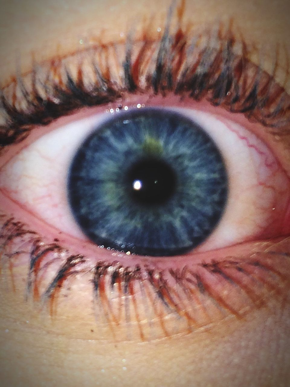 human eye, one person, real people, looking at camera, sensory perception, eyelash, eyesight, macro, human body part, close-up, eyeball, portrait, indoors, iris - eye, day, people