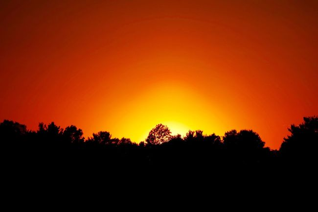 Orange Sky Following Sunset Over Silhouette of Trees Sunset Sunset Silhouettes Sunset_collection Tree Silhouette Orange Sky Orange Sky Sunset EyeEm Best Shots EyeEm Best Shots - Sunsets + Sunrise Fine Art Photography Beauty In Nature Serene Serenity 43 Golden Moments Idyllic Tranquil Scene