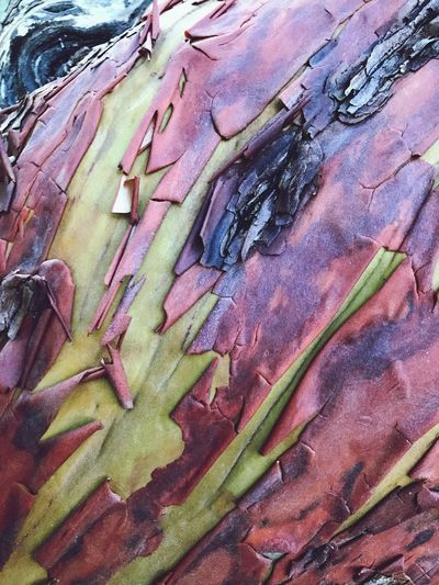 Treelove Nature Beauty In Nature Arbutus Bark WestCoast Close-up Tree Trunk Nature Lover Tranquility