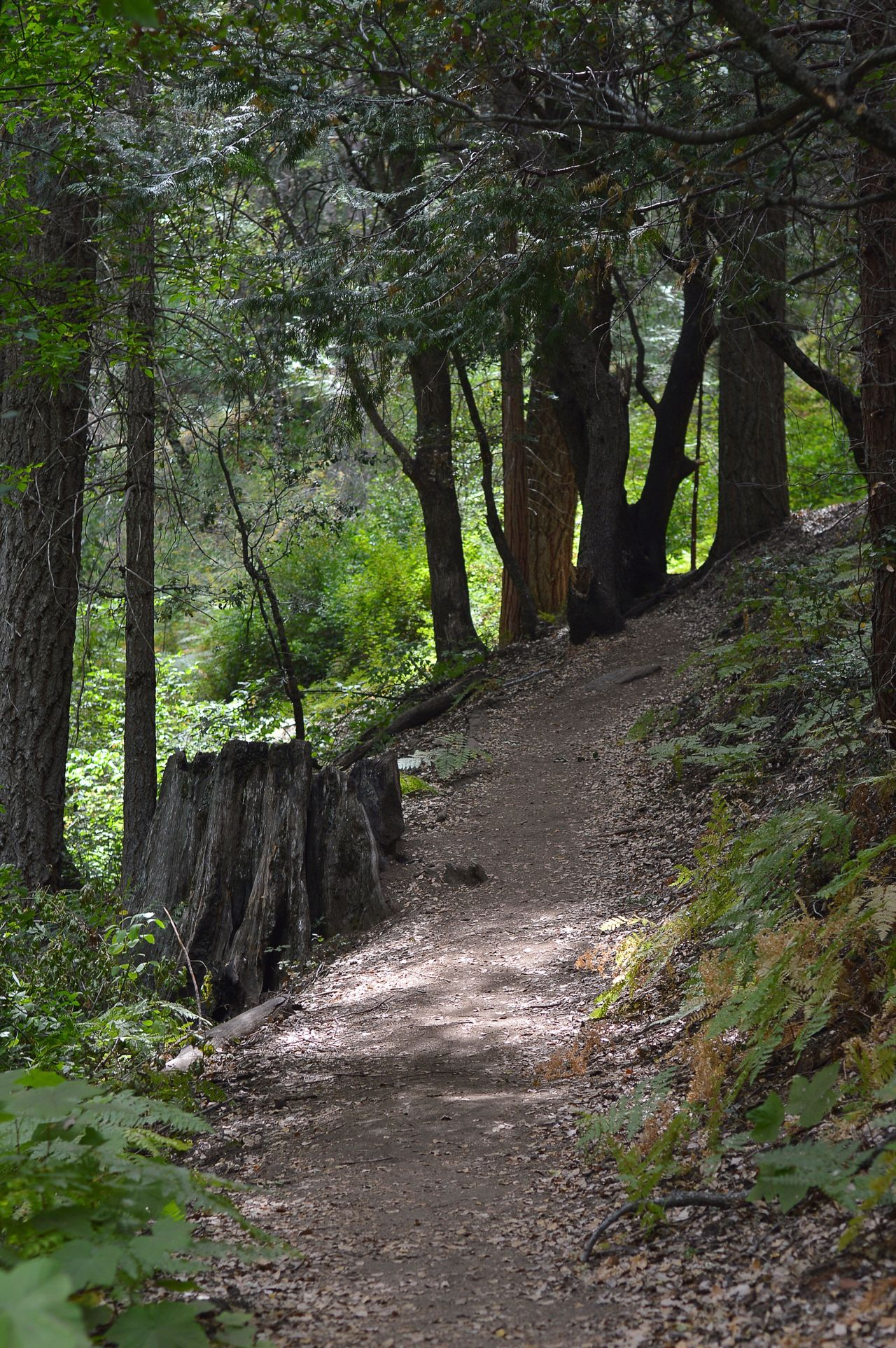Walking along mountain trails Palomar Mountain Forest Nature Landscape