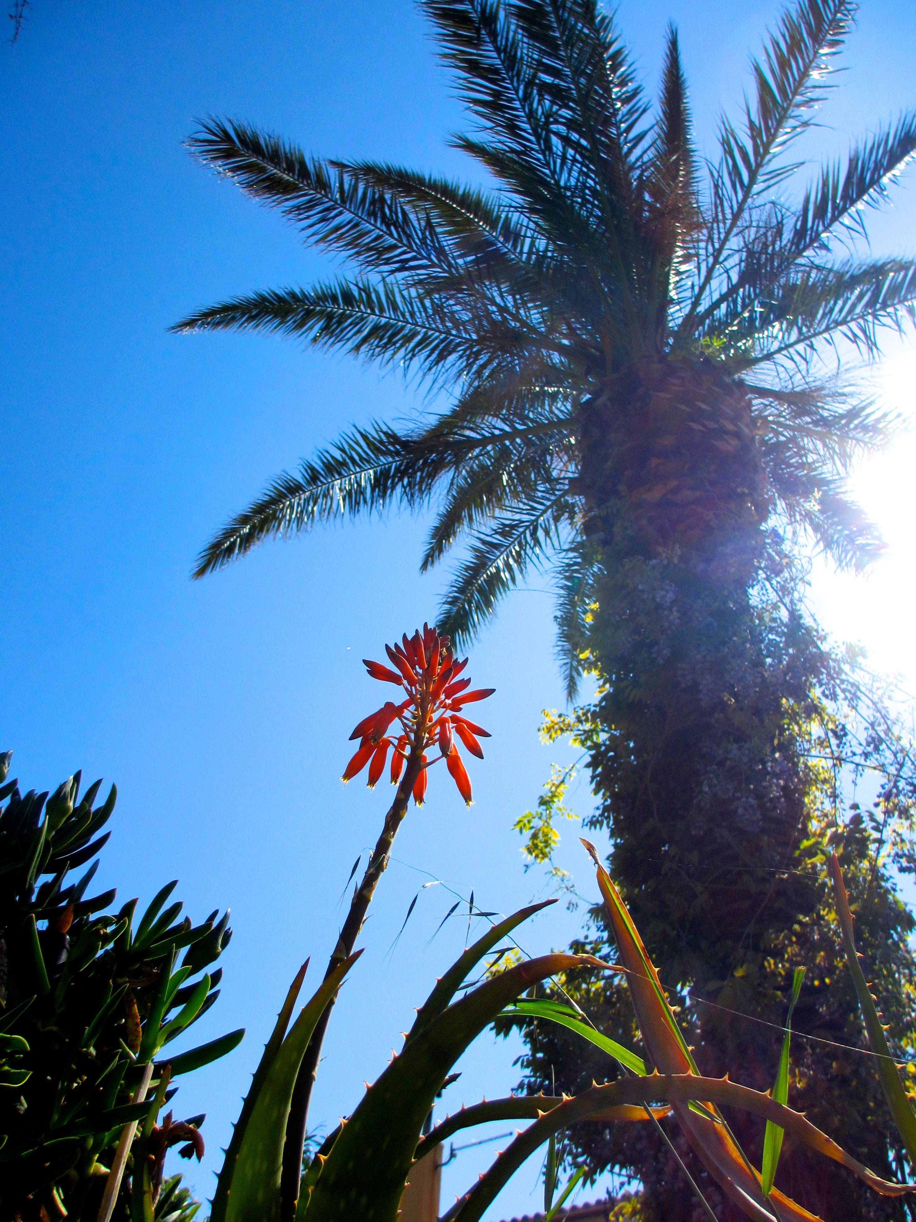 tree, low angle view, growth, nature, beauty in nature, no people, day, tranquility, palm tree, outdoors, sky, clear sky, freshness, close-up