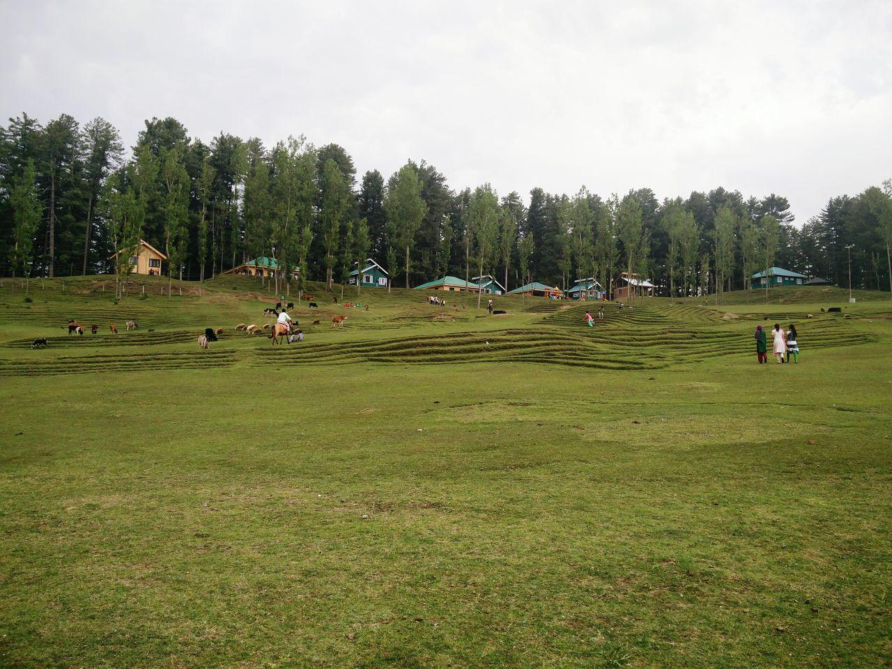 Sanasar, Jammu Sanasar Jammu First Eyeem Photo Nature Photography Scenery Green Nature Meadows Huts Trees