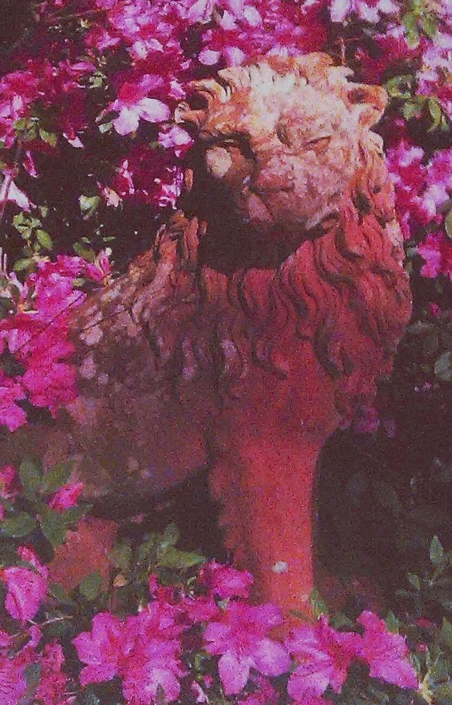 Jasmine Hill Gardens Showcase: February Check This OutAzelia Gardens Gardenscapes Stone Statue Wetumpka, AL Lion Things I Like