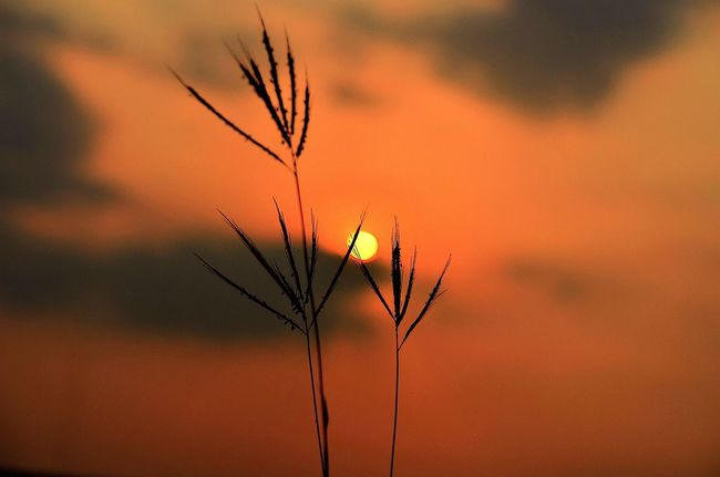 I love to be simple Enjoying Life EyeEm Best Shots Nature_collection Sunset #sun #clouds #skylovers #sky #nature #beautifulinnature #naturalbeauty #photography #landscape