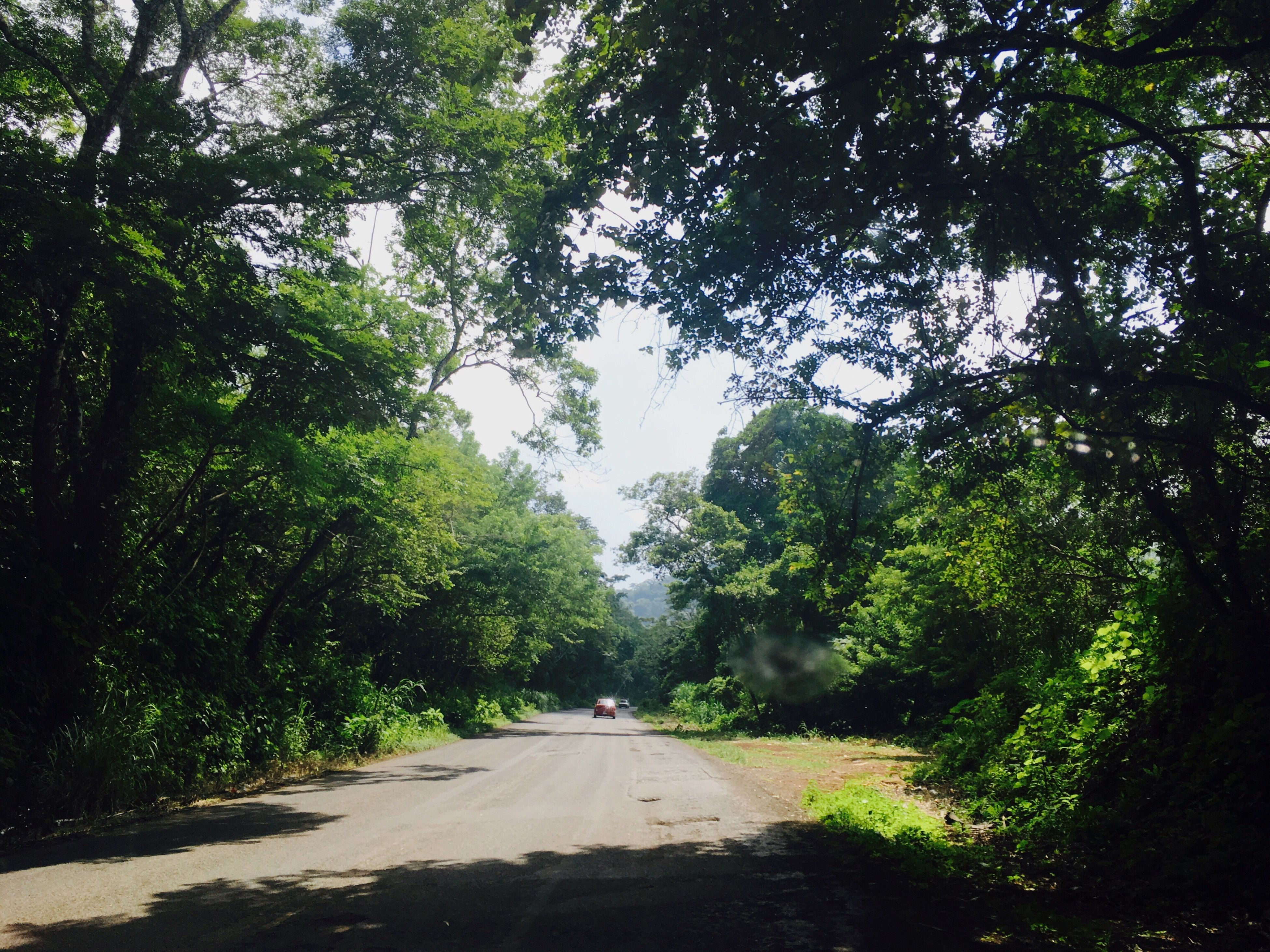 tree, the way forward, day, road, nature, growth, tranquil scene, tranquility, green color, outdoors, scenics, no people, beauty in nature, sky