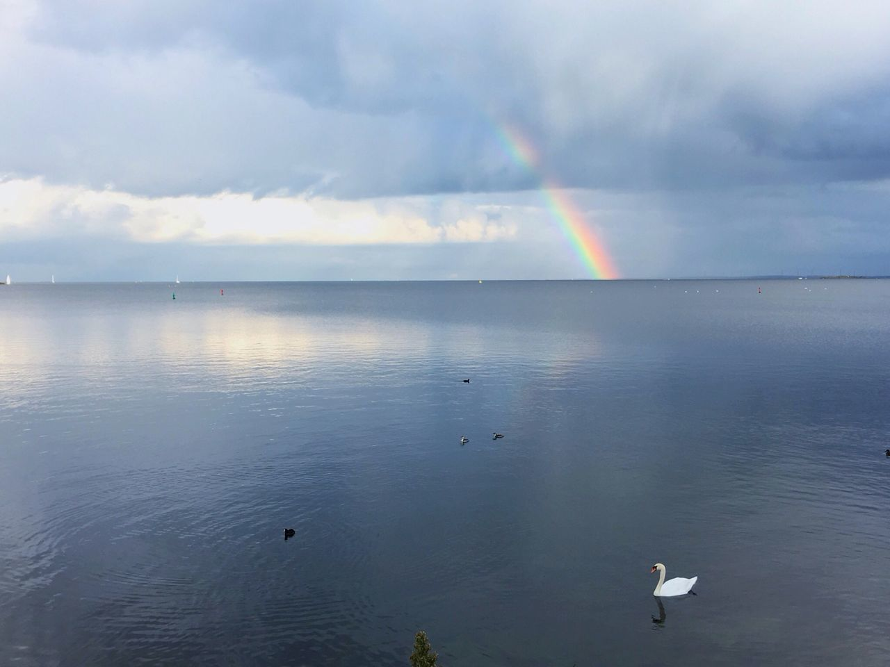 IJmeer Ijburg Rainbow Swan