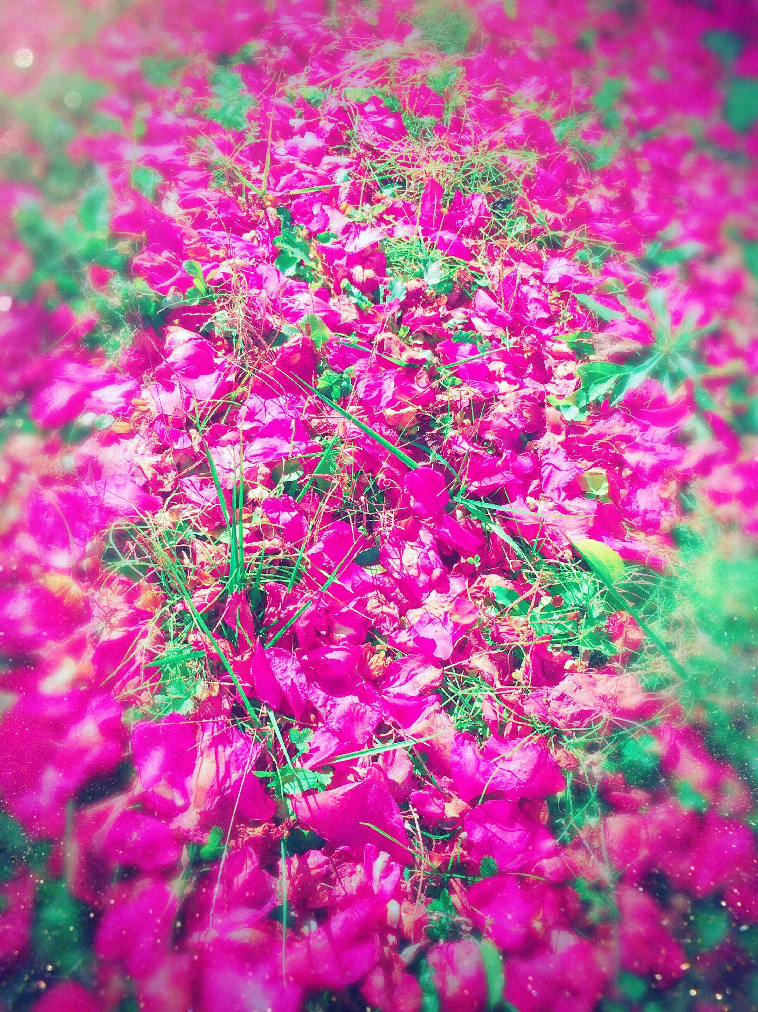 pink color, nature, growth, close-up, microscope, biology, no people, complexity, backgrounds, animal themes, beauty in nature, freshness, microbiology, day, undersea