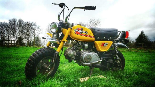 Minitrail Z50 Honda Hondamonkey Hondaz50 Z50A Monkeybike Hondaz50j