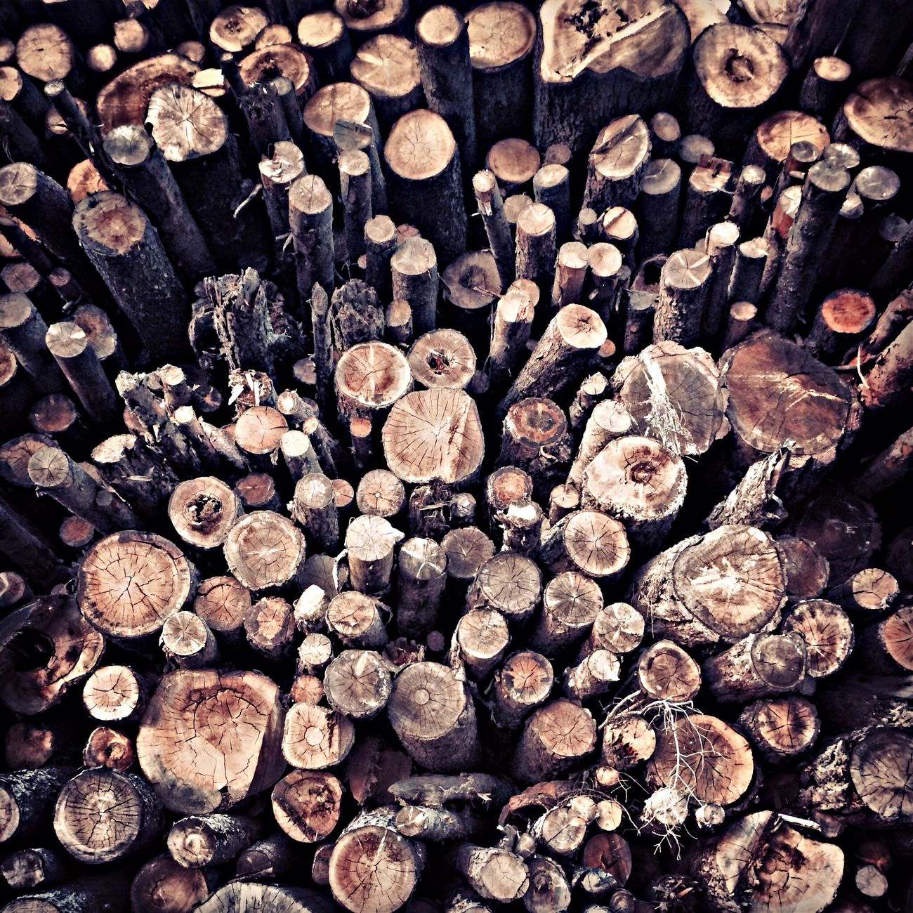 Wood. Lots and lots of wood. Wood Logs