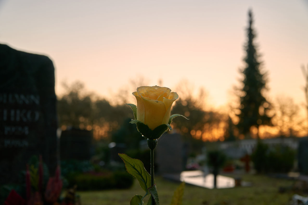 cemetery memories part 10 Rose🌹 Flower Sunset Close-up Nature Beauty In Nature Cemetery Graveyard Graveyard Beauty Silence Mood EyeEm Gallery Shootermag Bokeh Perspective Landscape Tranquility Eye4photography  Photography Lucky's Memories Lucky's Colors Sadness Sorrow Fine Art Photography Tranquil Scene