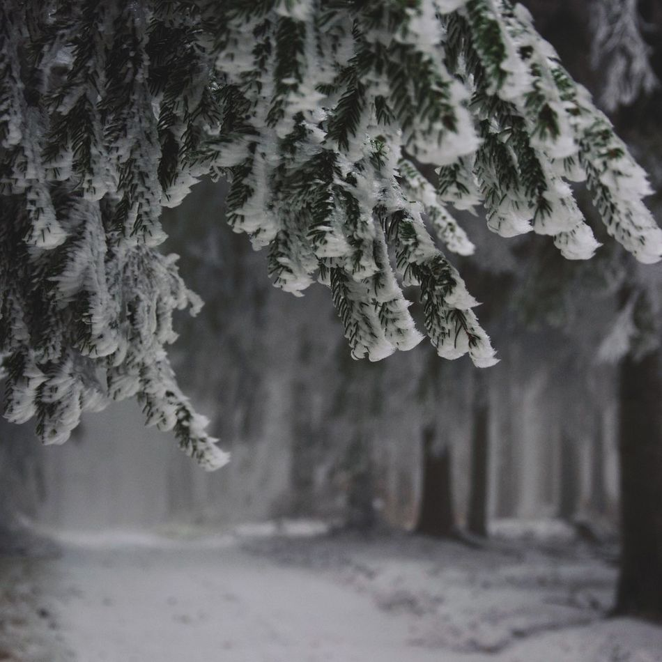 Nature WoodLand Eyeemphoto Landscape Taking Photos Eye4photography  Outdoors Hello World Trees EyeEm Nature Lover Nature Photography