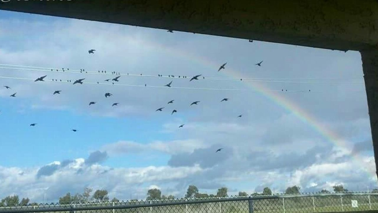 Somewhere Over The Rainbow Rainbow Blackbirds Sky Rainbow Taking Photos Nature At Its Best Check This Out Hello World Enjoying Life I Love You Pacific Sun The Great Outdoors - 2016 EyeEm Awards
