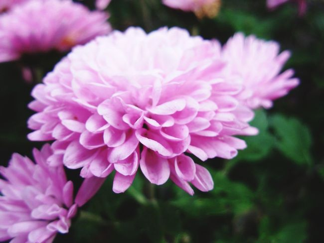 Colour Of Life Bright Colorful Flower Purple Enjoying Life Love Life Be Active Eyeemphoto