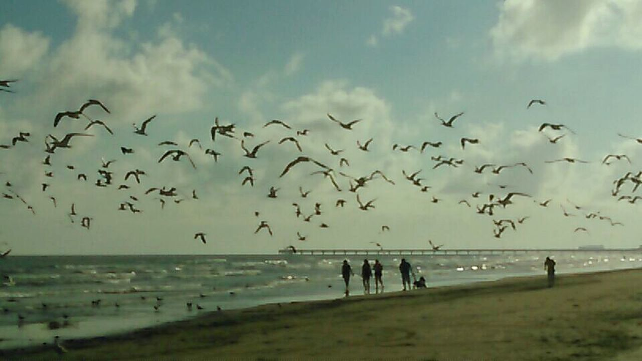 large group of animals, flock of birds, bird, sea, beach, nature, animals in the wild, animal themes, water, flying, sky, beauty in nature, togetherness, horizon over water, migrating, outdoors, scenics, day, no people