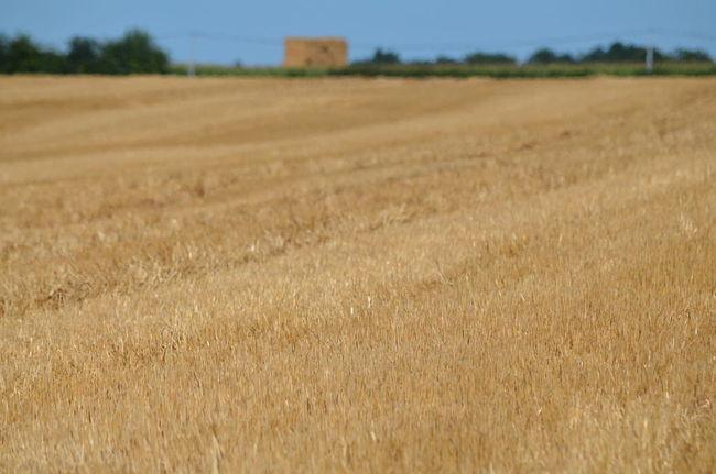 Ces images ont été prises le 7 août 2016 dans le département des Deux-Sèvres en France. Champ Field Harvested Moissonné