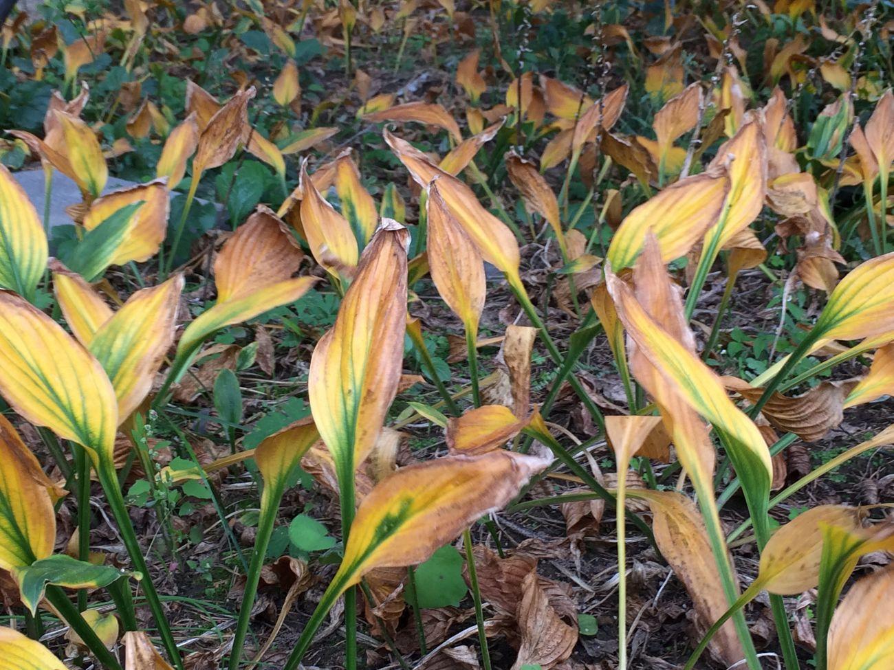 在丰满大青山拍摄 Nature Autumn Season  Outdoors First Eyeem Photo