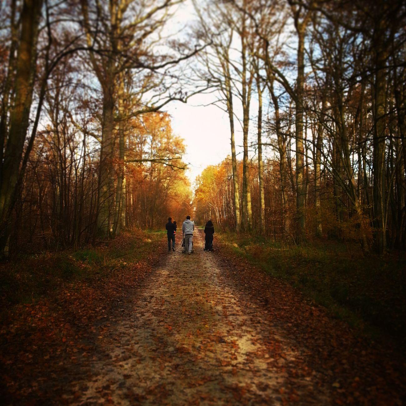Parisian autumn Vanishing Point Chasinglight Autumn Colors Naturelovers Landscape