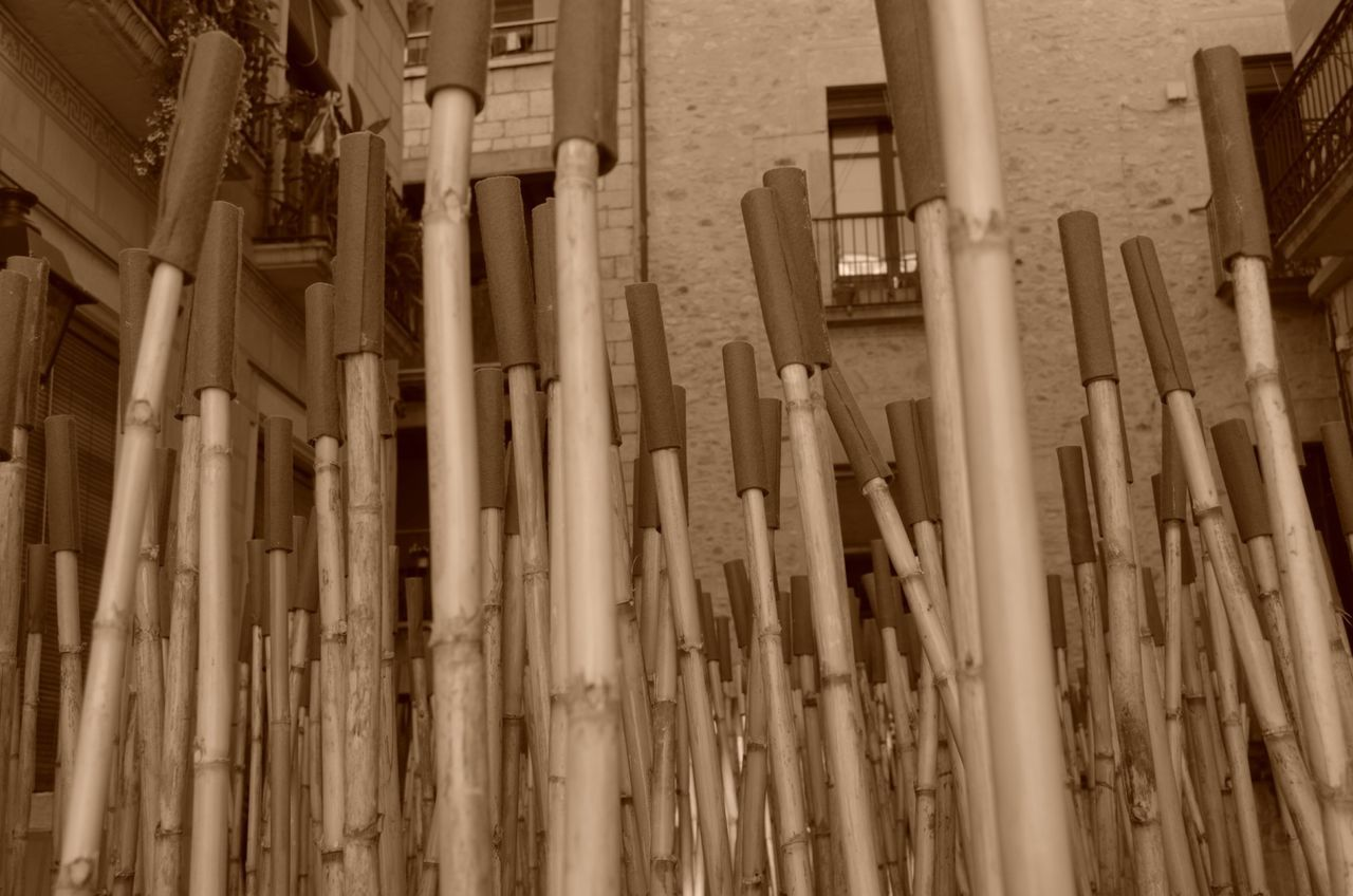 Large Group Of Bamboos Amidst Building